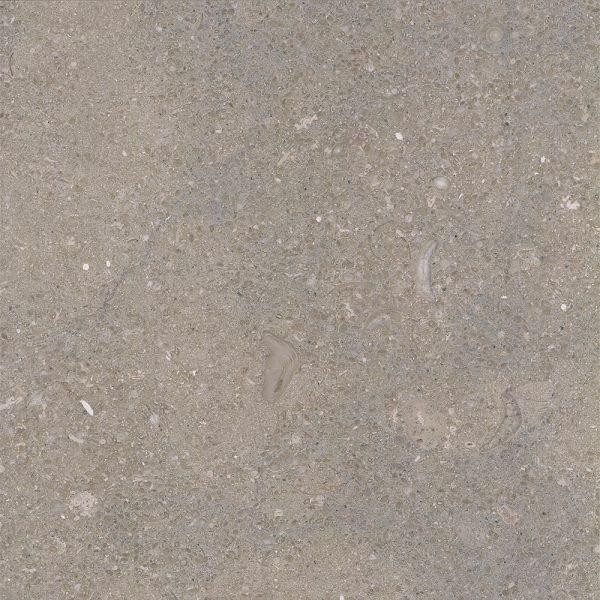 fossil limestone 1