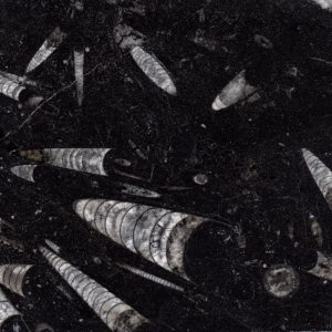 nero fossile sample