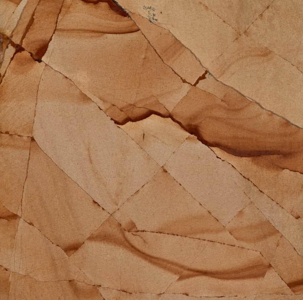 Teak Wood Sample